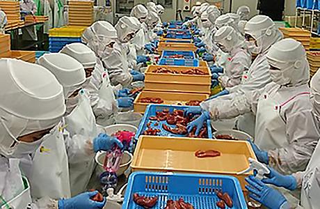 水産物の加工製造中の写真